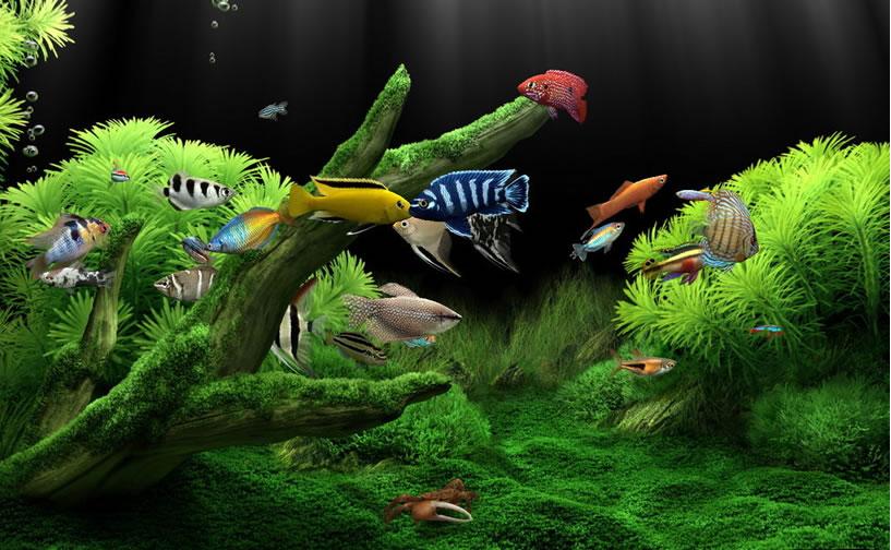Uređenje akvarijum