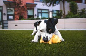 Šta Vam je potrebno za novo štene