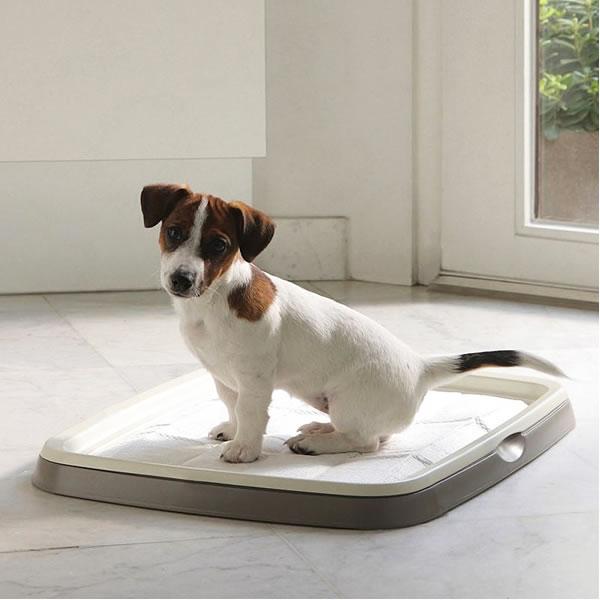 Kako naučiti štene u stanu higijenskim navikama