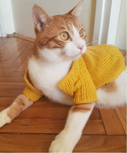 Pozdrav od mačka Feliksa :)