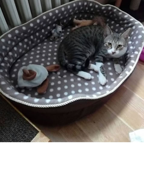 Maca Milica