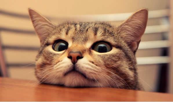 Zanimljive činjenice o mačkama