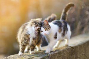 """Slušajte šta vam mačke """"govore"""""""